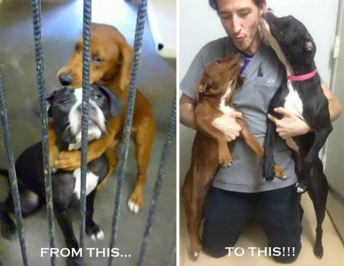 'Facebook' spēks: kā divus suņus pēdējā brīdī no nāves izglāba