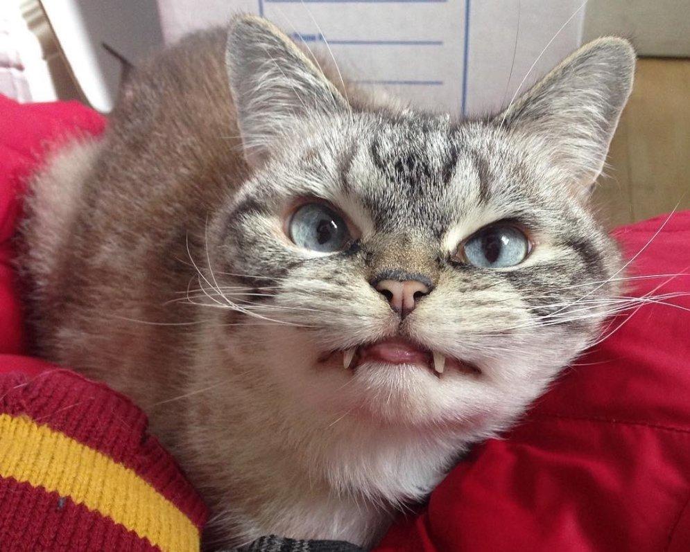 Interneta varonis – kaķis, kurš izskatās pēc īsta vampīra