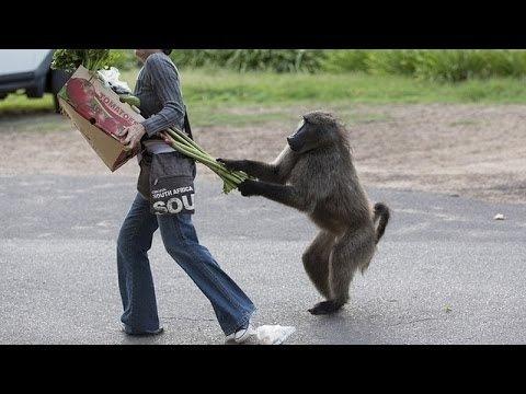 Dzīvnieki mēdz būt tik bezkaunīgi!...