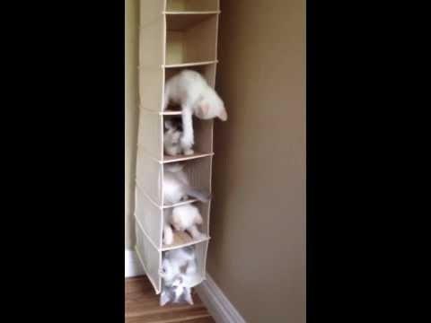 Nepārspējams kaķēnu tornis