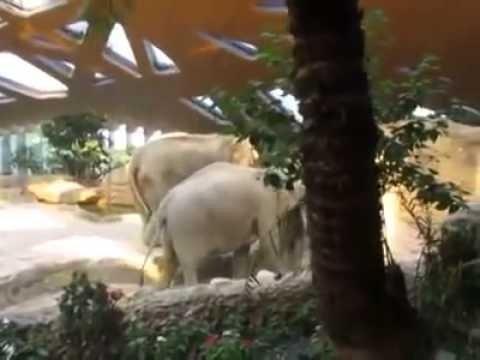 Audzinot zilonēnu