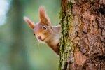 Cirst mežu varēs arī valsts drošības un aizsardzības vajadzībām