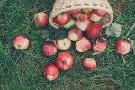 Vīrietis gūst traumu ābolu lasīšanas laikā; sieviete saindējas ar kaimiņu sēņu zupu