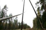 'Sadales tīkls': Pētermuižas dižtūja bija sasvērusies uz elektrolīnijas pusi