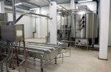 Piena pārstrādes uzņēmumos sāk trūkt darbaspēka, bažījas piensaimnieki