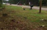 Video: Rojā auto lielā ātrumā notriec vīrieti; policija aizturējusi aizdomās turamo