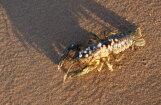 ФОТО: Неожиданная находка под Рождество на пляже в Вакарбулли