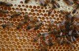 Daļai biškopju šoziem gājusi bojā puse bišu saimju