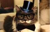 Internetā slavens kļuvis kaķis hipsters