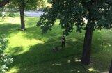 Prezidenta pils pagalma zālājā dārznieks izpļauj savādu zīmi; VNĪ grasās pārtraukt sadarbību