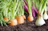 Комиссия Сейма одобрила снижение НДС на латвийские фрукты, ягоды и овощи до 5%