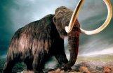 Путин намерен клонировать мамонта