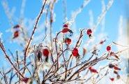 Погода с 19 по 25 ноября: зима наконец-то