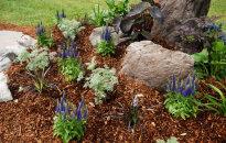 Dārza mulčēšana - kas tas ir un kā pareizi to darīt?