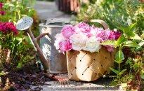 Daiļdārzā, siltumnīcā un sakņu dārzā: dārza darbi jūnijā