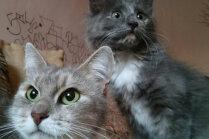 Izglābt kaķus un nepieļaut iemidzināšanu: divu mīluļu saimnieces Barbaras stāsts
