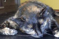 Steidzami lūdz palīdzēt kaķenītei, kurai nepieciešama operācija