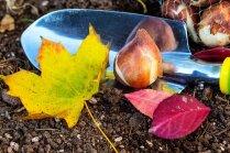 Как правильно выбрать и сажать осенние луковичные (+лунный календарь)