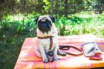 Foto: Orientēšanās sacensībās 'kronēts' stilīgākais suns un saimnieks