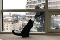 Video: Melns runcis piestrādā par logu tīrītāju