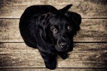 'Dogo' sāga, negadījums Babītē un kaķēnu bums – kas šogad noticis zvēru dzīvē