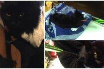 Ar bultu sašautais kaķītis Stopiņos atveseļojas; policija lūdz atsaukties aculieciniekus