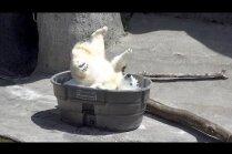 Video: Lācenīte Nora bauda ledus gabaliņu vannu