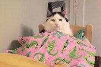 Četrkājainā dāmīte Sofija, kura naktis pavada mazā gultiņā