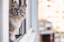Kā labāk vēdināt istabas, ja mājās ir dzīvnieks