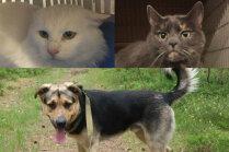 Meklē mājas: enerģiskais Ķobis un divi kaķīši, kuri patversmē nonākuši saimnieku dēļ