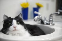 Kāpēc kaķiem patīk uzturēties vannasistabā