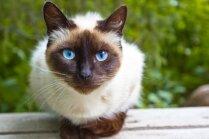 Pārgalvīgs kaķis desmit kilometrus pavada braucošas automašīnas priekšējā bamperī