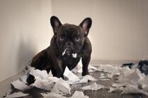 Pieci ietiepīgi suņi, kuri izliksies, ka nedzird saimnieku