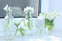 Feinas idejas kompozīcijām ar pavasara vēstnesēm sniegpulkstenītēm