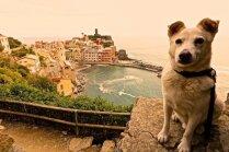 Foto: Suņuks Ralfs, kas priecīgi pozē dažādās pasaules valstīs