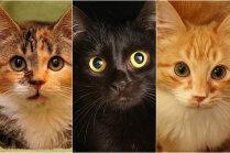 Meklē mājas: bailīgā Marķīze un kaķīši, kas atrasti kastē kāpņu telpā
