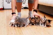 Video: Desmit kaķēni nepaklausīgi stājas rindiņā