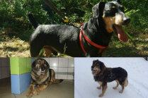 Meklē mājas: divi suņu opīši un Feja, kura patversmē mīt jau gadiem