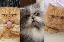 Foto: Trīs populāri persieši, kuri kļuva slaveni izskata dēļ