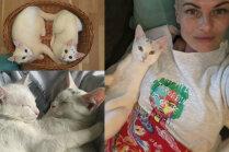 Kaķi no sniegā izmesta maisa: kā Evija piepildīja sapni par baltiem runčiem