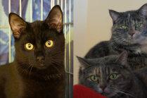 Meklē mājas: trīs kaķīši, ar kuriem jaunajam saimniekam būs 'jāpastrādā'