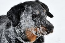 Apsaldēti kaķi un 'salūta suņi' - janvāris Latvijas dzīvnieku patversmēs