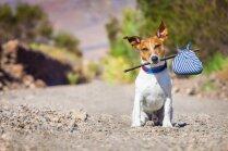 'Aizsūtīt' suni uz Kanādu? Ārzemju latvieši izvēlas adoptēt pašmāju patversmes zvēriņus