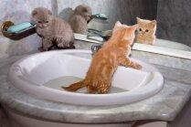 Seko dušā un nebaidās nopeldēties – kaķi, kuriem patīk ūdens