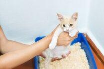 Vienkārši paņēmieni, lai kaķis apmeklētu kastīti