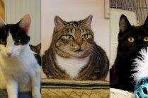 Ko darīt ar nepieprasītiem kaķiem? Peļu junkuriņi, kuri patversmē mīt jau ilgi