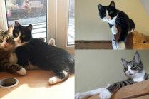 Pupa un Puika – kā dzīvo laimīgi kaķīši, kuri reiz 'pusdzīvi mētājās uz ielas'