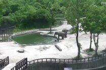 Video: Ziloņu ģimenīte Dienvidkorejā izglābj slīkstošo atvasi