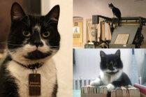 Pašiem savs Johans Gūtenbergs! Kaķis, kurš piesaista apmeklētājus papīra muzejā Tartu