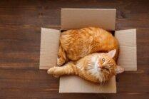 Kāpēc kaķiem patīk gulēt šaurās vietiņās